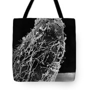 Bacteria On Sorghum Root Tip Tote Bag