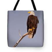 Bald Eagle - Pride Of America Tote Bag