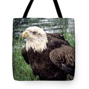 Bald Eagle At Riverside  Tote Bag