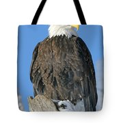 Bald Eagle Haliaeetus Leucocephalus Tote Bag