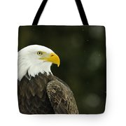 Bald Eagle In Ecomuseum Zoo Tote Bag
