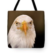 Bald Eagle Looking In Tote Bag