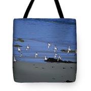 Band Of Seagulls Tote Bag