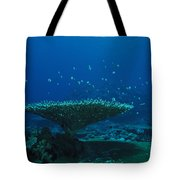 Banded Damselfish Swim Tote Bag