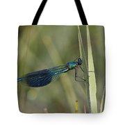 Banded Demoiselle Calopteryx Splendens Tote Bag by Konrad Wothe