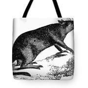Bandicoot Tote Bag
