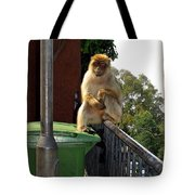 Barbary Ape Tote Bag