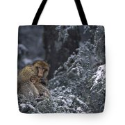 Barbary Macaque Male With Infant Tote Bag