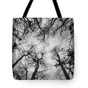 Bare Cypress Tote Bag