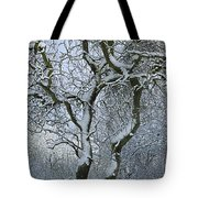 Bare, Snow-covered Tree In Winter Tote Bag