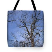 Bare Trees With Blue Sky Tote Bag