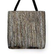 Barren Aspen Tote Bag