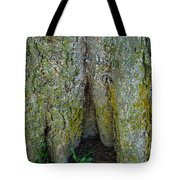 Base Of The Tree View Tote Bag