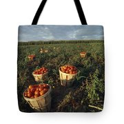 Baskets Of Fresh Tomatoes In A Field Tote Bag