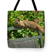 Basking Squirrel Tote Bag