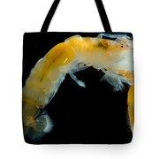 Bay Ghost Shrimp Tote Bag