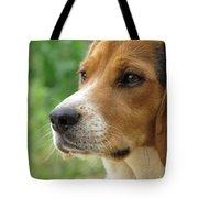 Beagle Gaze Tote Bag