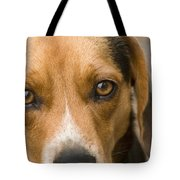 Beagle Hound Dog Eyes Of Love Tote Bag