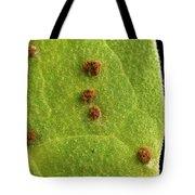 Bean Leaf With Rust Pustules Tote Bag