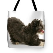 Bearded Collie Pup Tote Bag