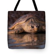 Beaufort The Turtle Tote Bag