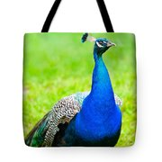Beautiful And Pride Peacock On A Lawn Tote Bag
