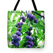 Beautiful Blue Plums On The Tree Tote Bag