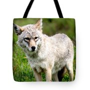 Beautiful Coyote In Alaska Tote Bag