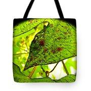 Beautiful Deday Tote Bag