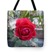 Beautiful Red Rose In A Small Garden Tote Bag