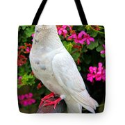 Beautiful White Pigeon Tote Bag