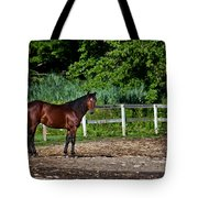 Beauty Of A Horse Tote Bag