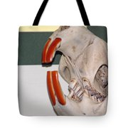 Beaver Teeth Tote Bag
