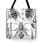 Bee Anatomy Historical Illustration Tote Bag