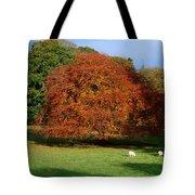 Beech Tree, Glendalough, Co Wicklow Tote Bag