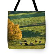 Beef Cattle Grazing In Autumn, North Tote Bag