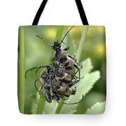 Beetle Mania Tote Bag