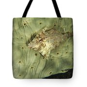 Beige Juvenile Filefish Hiding Tote Bag