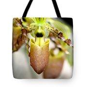 Beige Lady Slipper Orchids Tote Bag