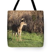 Being Aware - Deer Tote Bag