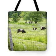 Belted Galloway Cows On  Farm Rockport Maine Photo Tote Bag