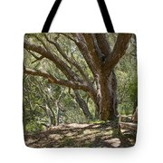 Bench And Tree In Cambria II Tote Bag