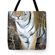 Bengal Tiger In Pench National Park Tote Bag