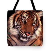 Bengal Tiger In Thought Tote Bag
