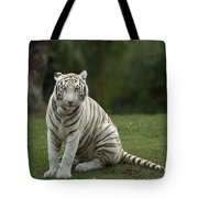 Bengal Tiger Panthera Tigris Tigris Tote Bag