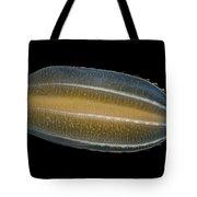 Beroe Cucumis Comb Jelly Tote Bag by Ingo Arndt