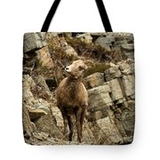 Big Horn On The Rocks Tote Bag
