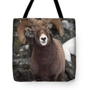 Bighorn Sheep, Maligne Canyon, Jasper Tote Bag
