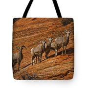 Bighorn Sheep, Zion National Park, Utah Tote Bag