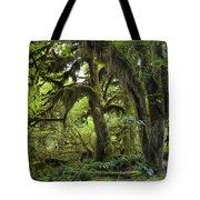 Bigleaf Maple Acer Macrophyllum Tote Bag